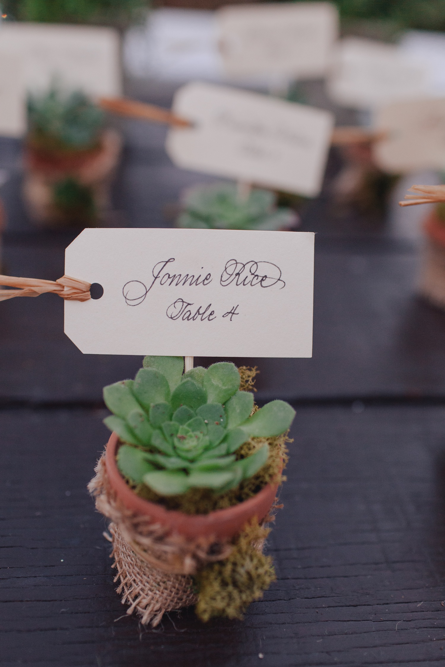 succulent escort cards, succulent wedding favors