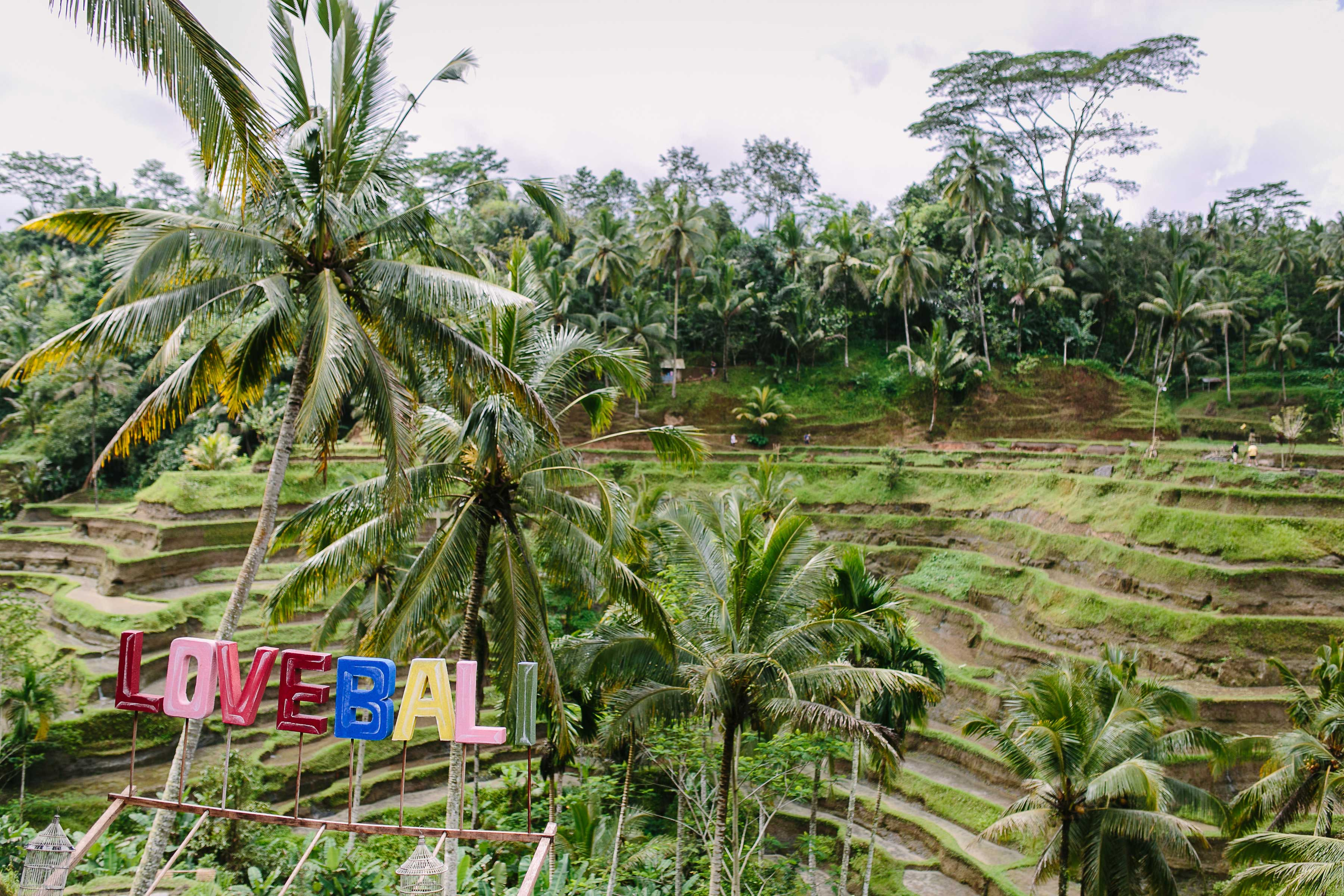 Love Bali rice fields Marry at the Mulia Bali