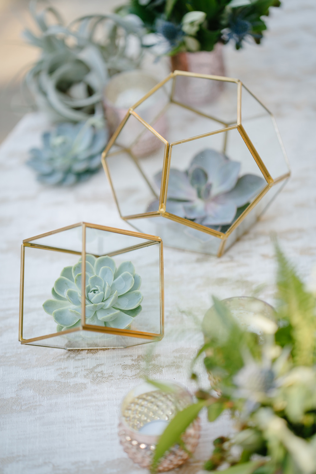Succulents in geometric gold clear terrariums