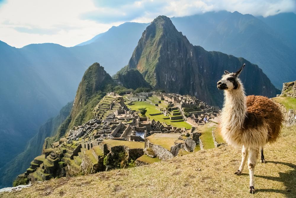 Llama in Peru on hilltop honeymoon ideas adventurous vacation