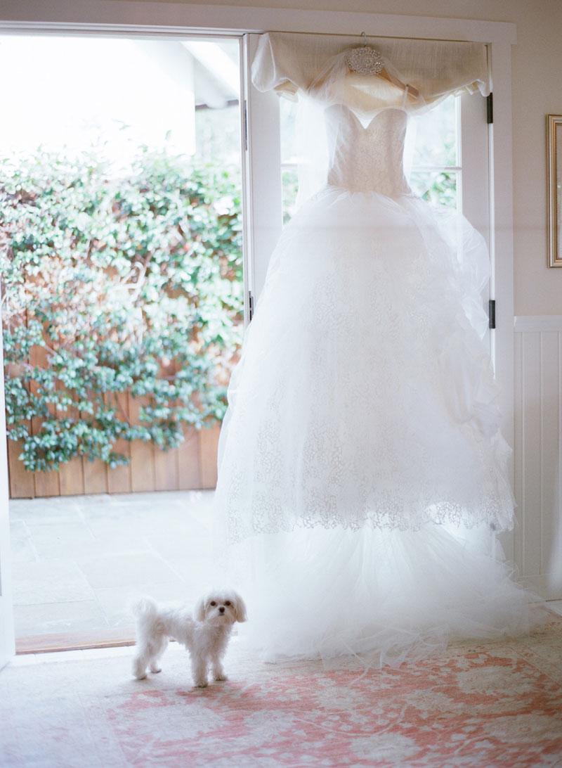 Little white dog with wedding dress flower girl