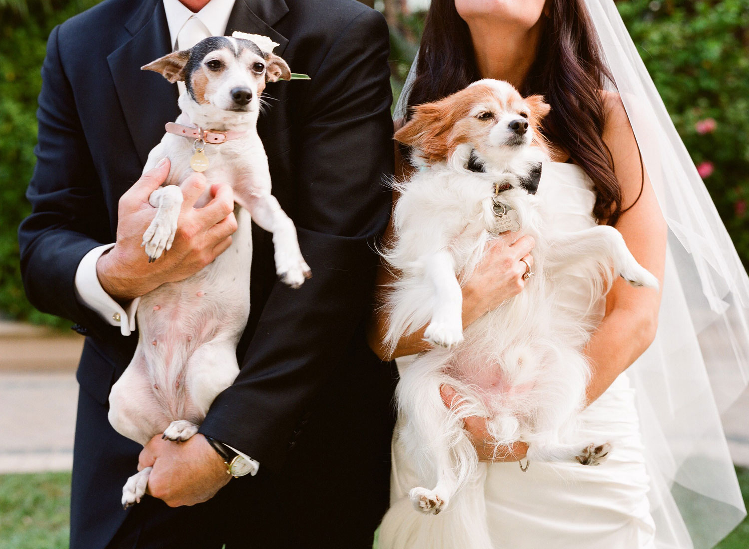 Bride and groom holding small dogs at wedding ceremony outdoors