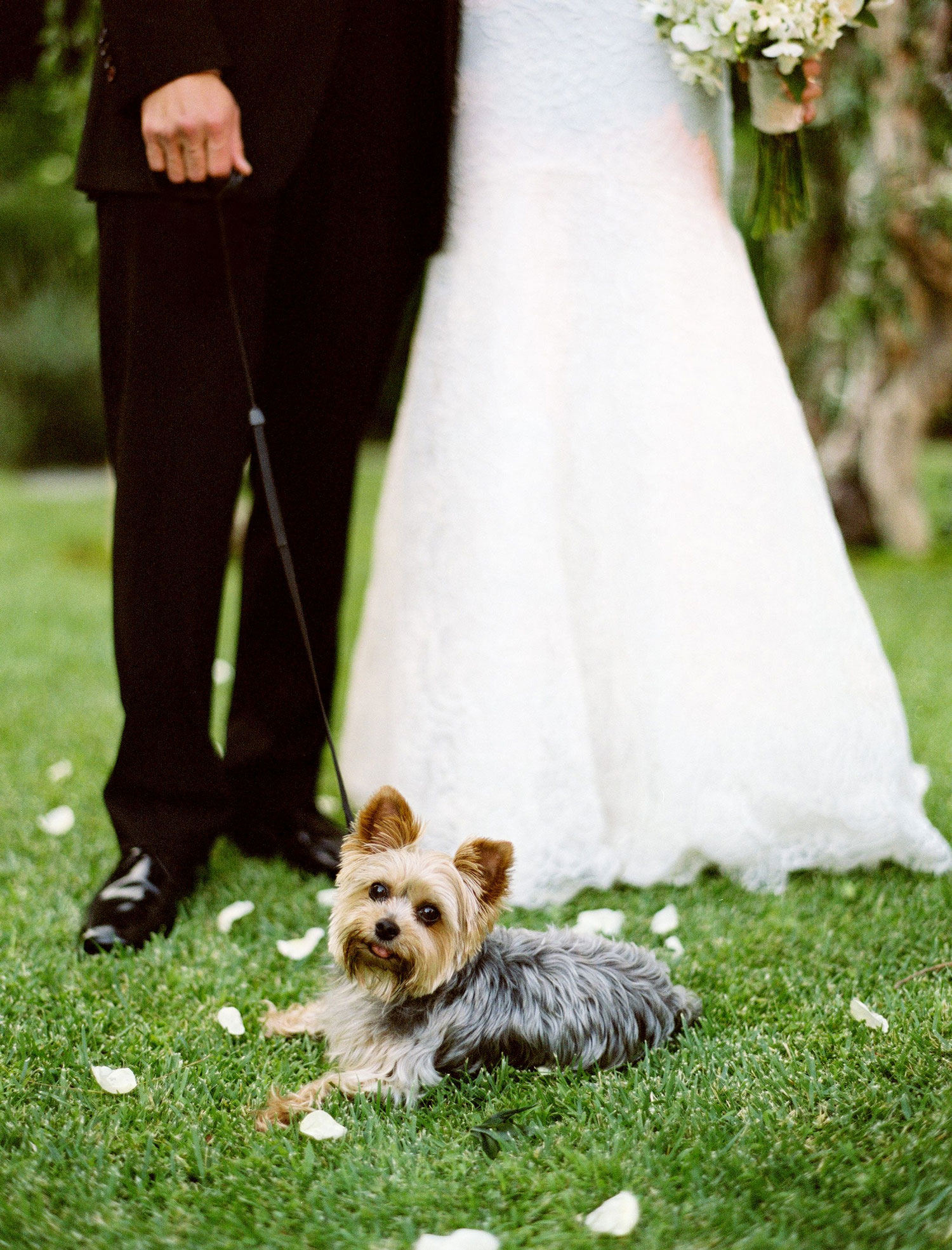 Bride and groom with yorkie yorkshire terrier at wedding