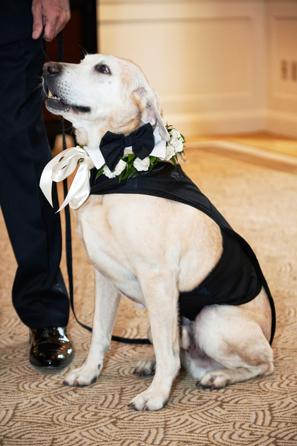 Lab dog with tuxedo outfit at wedding