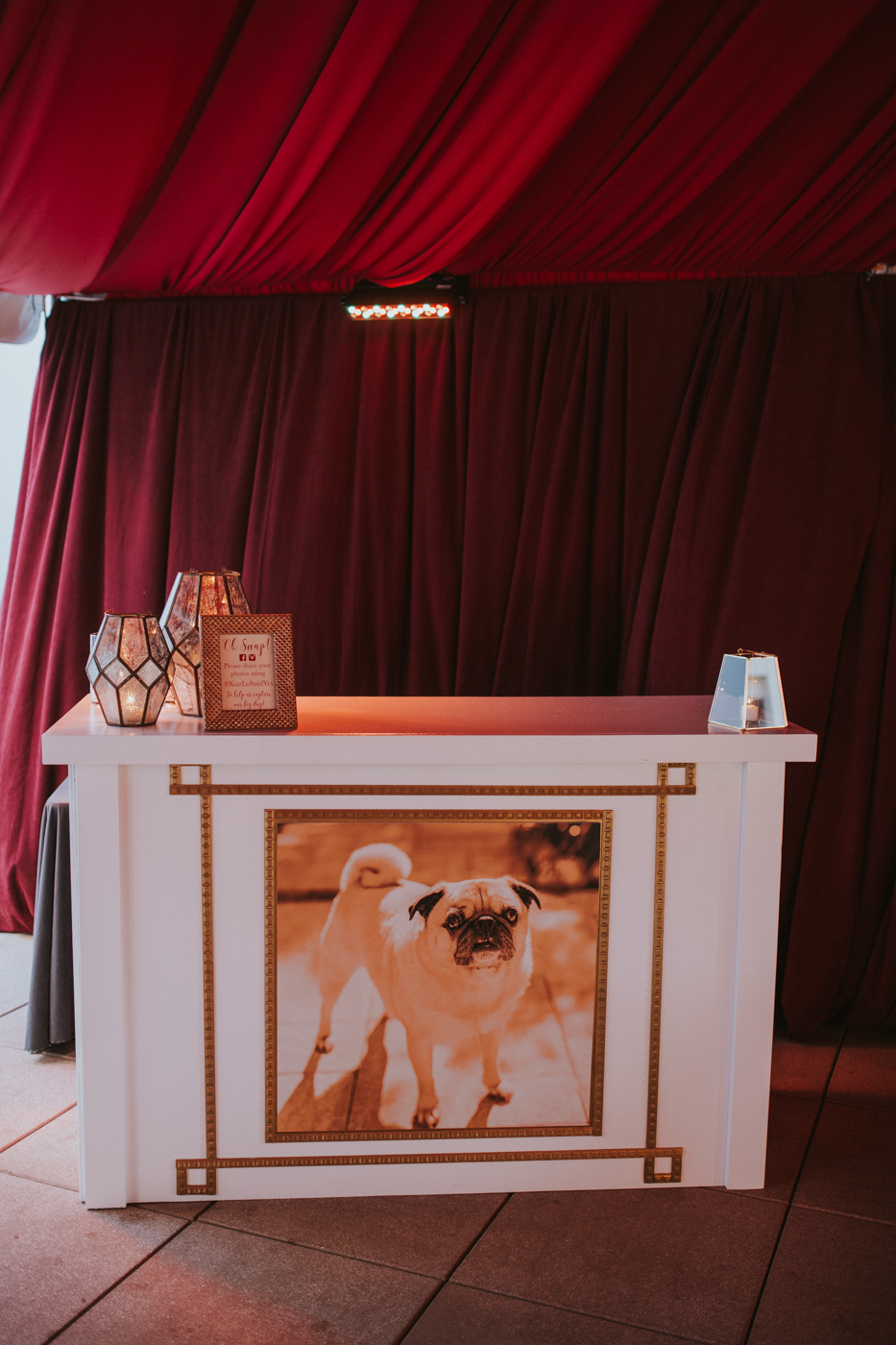 Photo of dog on wedding bar at cocktail hour