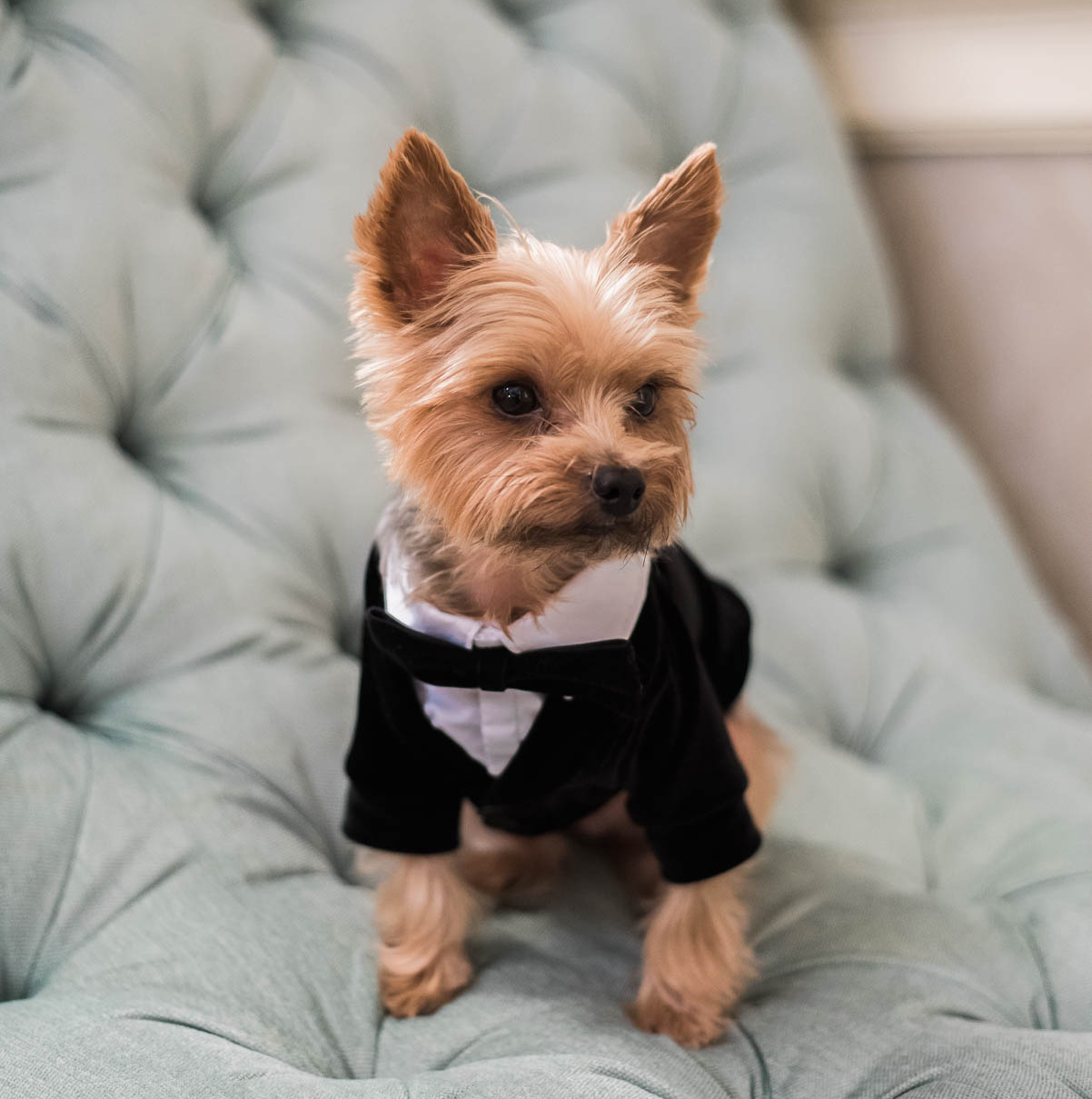 how to prepare your dog to be in your wedding
