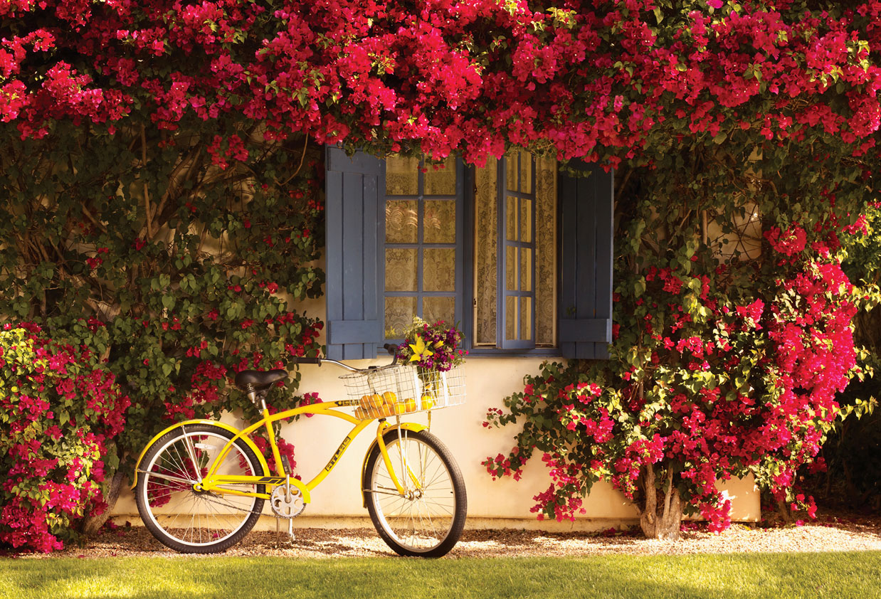 La Quinta Resort and Club bicycle with basket bike rentals