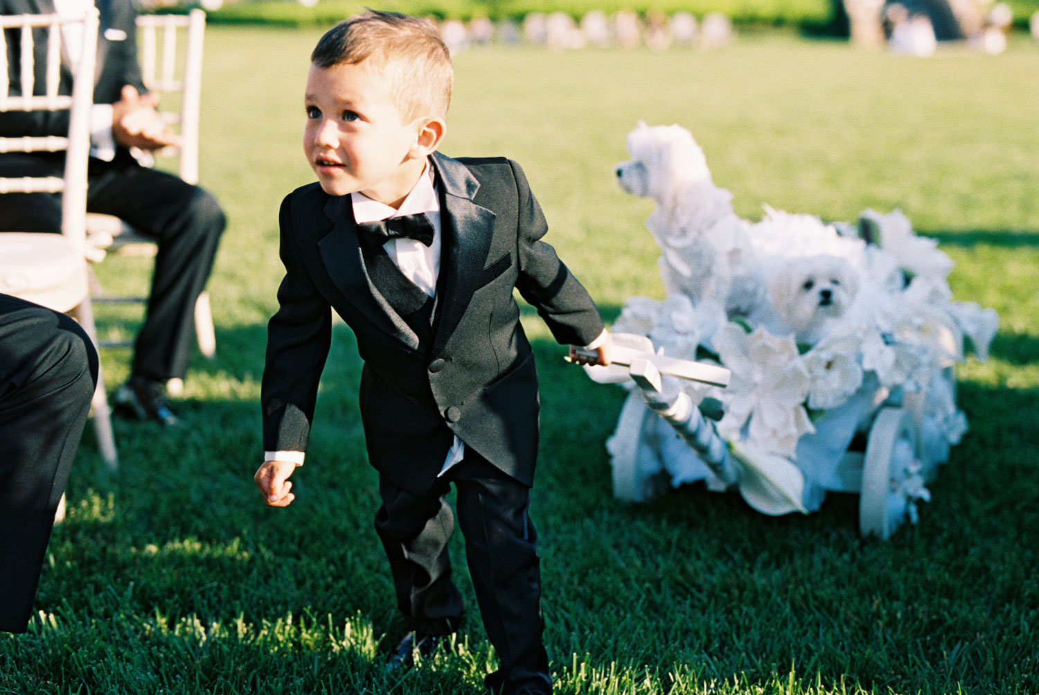 wedding ceremony outdoor young ring bearer pulling white wagon with little white dogs