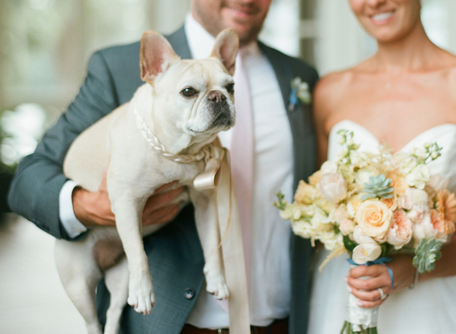 bride and groom holding cute french bull dog with custom collar and leash