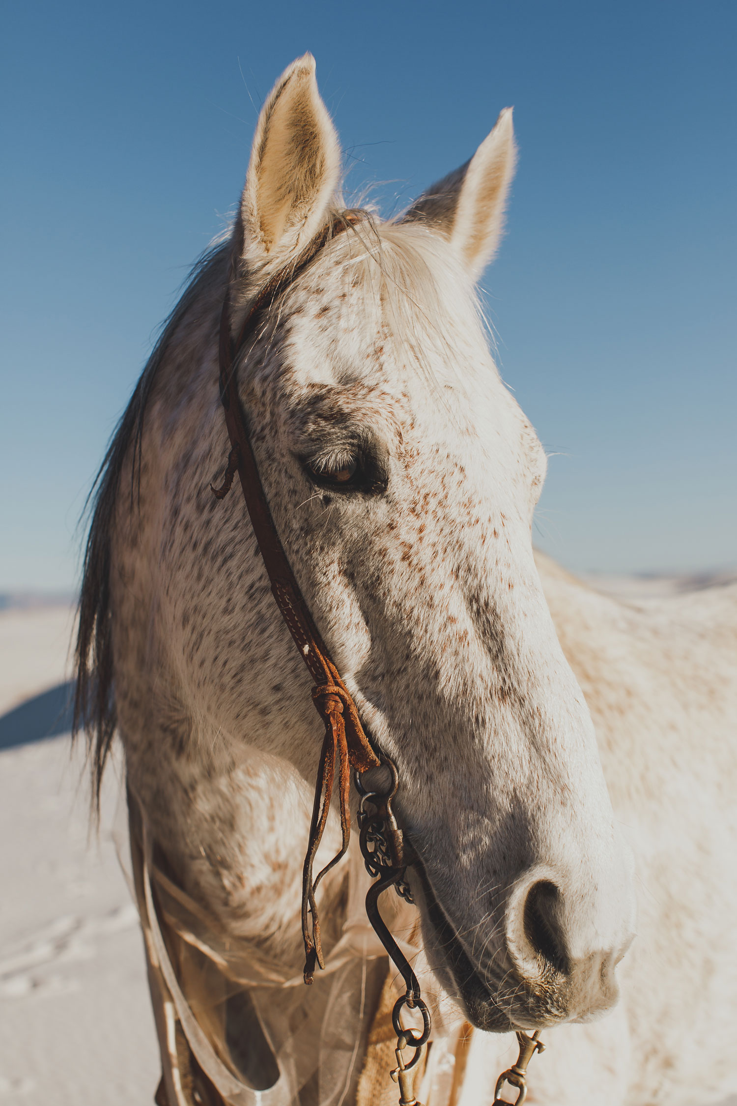 engagement photo shoot at White Sands National Monument in New Mexico engagement photos horse