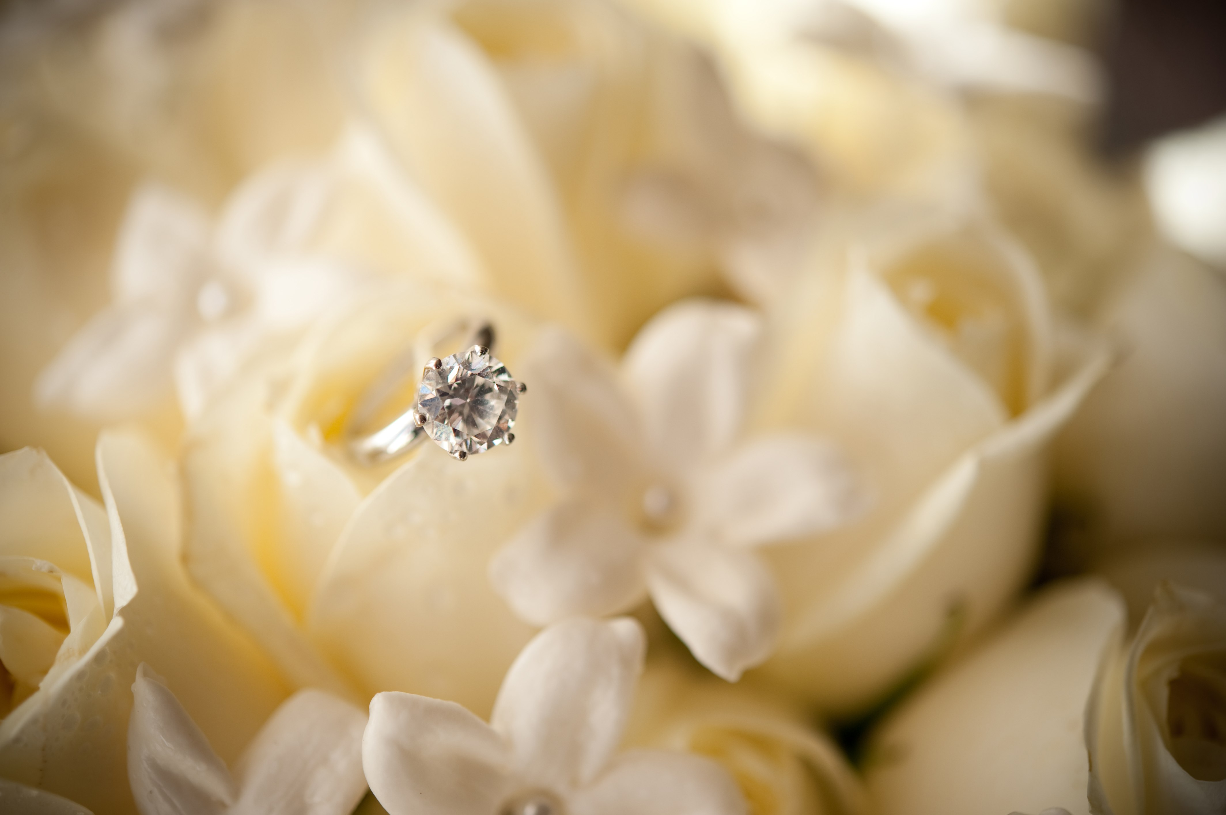 solitaire engagement ring with one diamond among white roses, buying the engagement ring after proposing