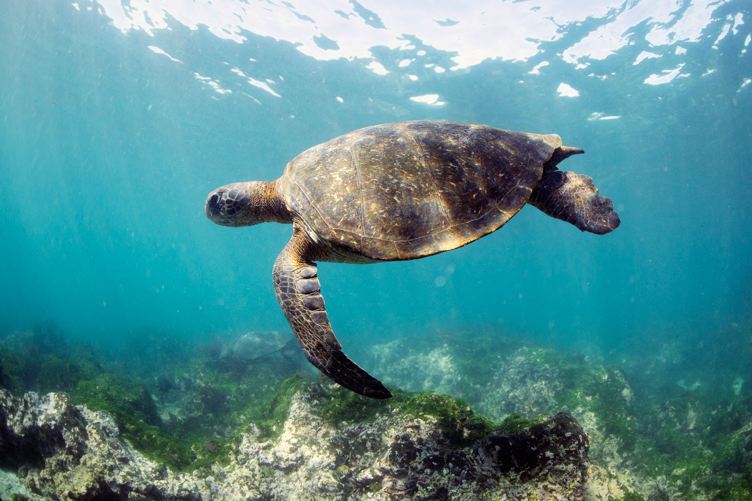 sea turtle honeymoon ideas luxury cruise in the galapagos islands travel tips reviews and suggestions