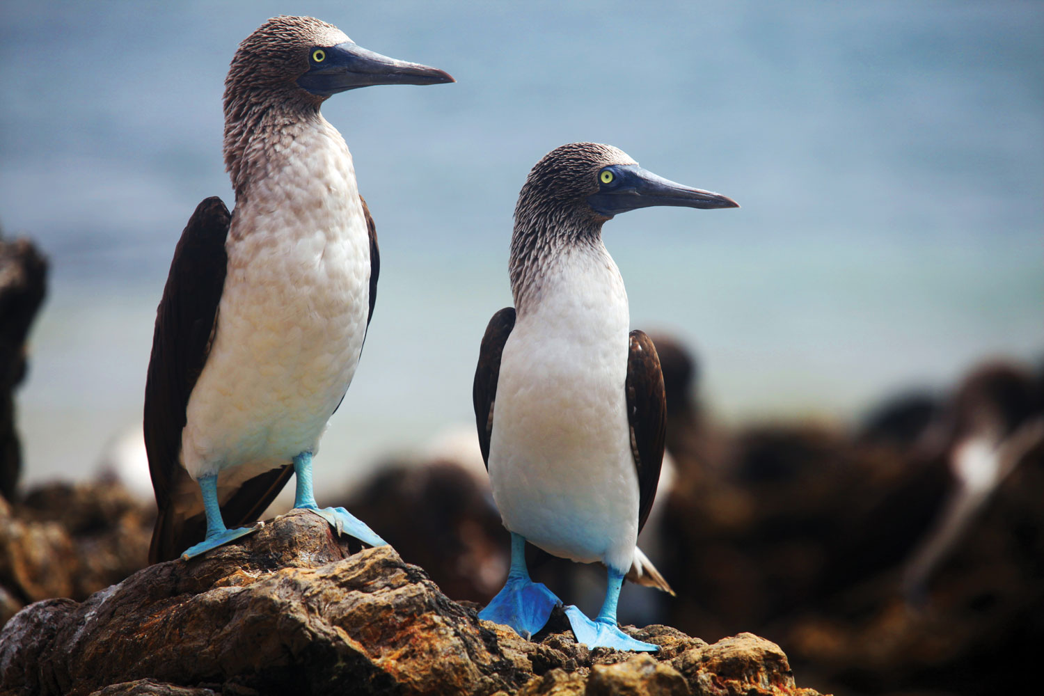 blue footed booby honeymoon ideas luxury cruise in the galapagos islands travel tips reviews and suggestions